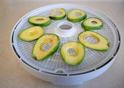 avocados on nesco dehydrator tray